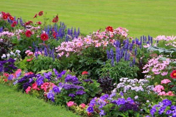 Цветы, которые можно посеять под зиму. Название, описание, фото