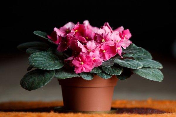 Цветы домашние комнатные цветущие - фото и названия