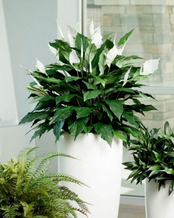Лучшие неприхотливые растения для офиса. Список комнатных с фото и описанием