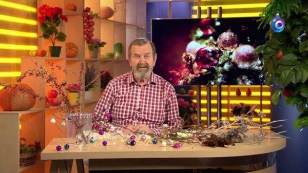 Украшения к Новому году из вашего сада. Удачные советы и видео