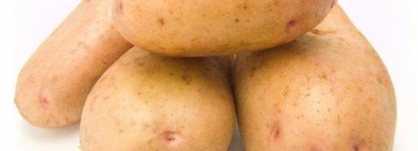 Картофель Американка - описание сорта, посадка, уход