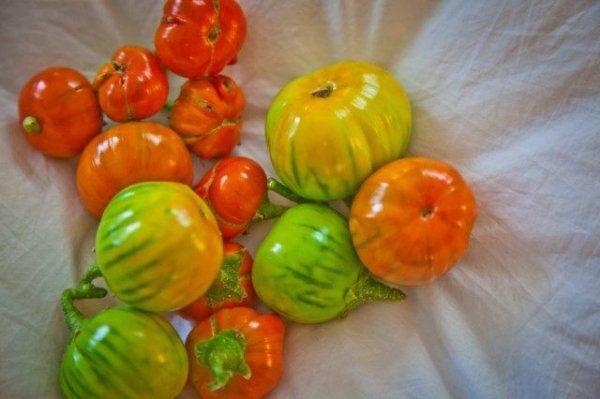 Выращивание баклажанов на юге и в Крыму