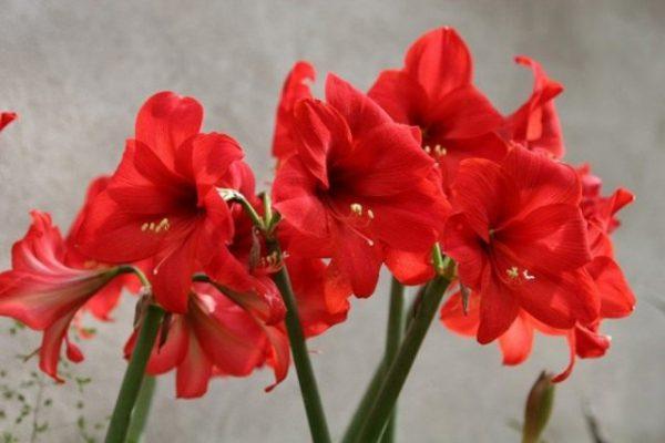 Красивоцветущие комнатные растения - список названий с фото