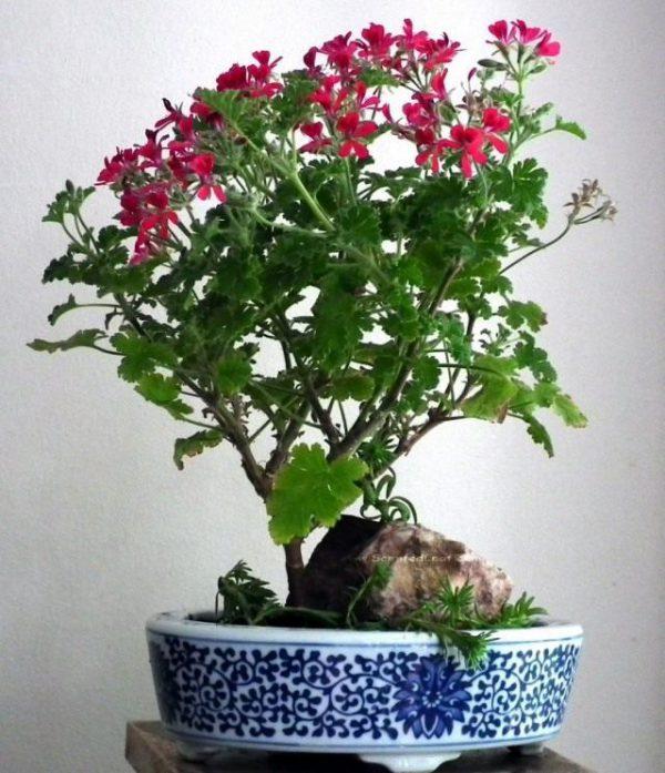 Популярные комнатные растения фото и названия ТОП-10