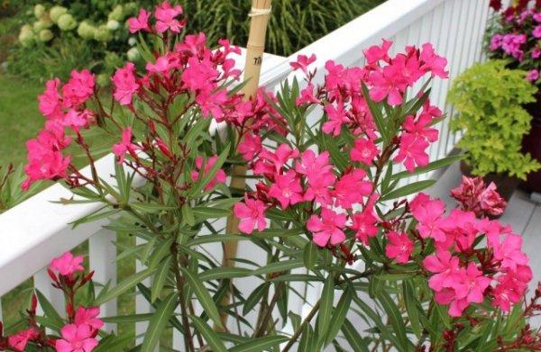 О чем следует помнить, если вы захотели привезти из отпуска растение?