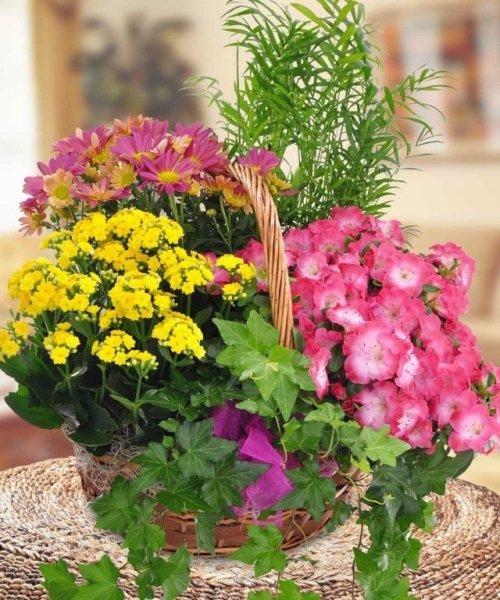 Комнатные растения в качестве живого букета и букеты из живых цветов