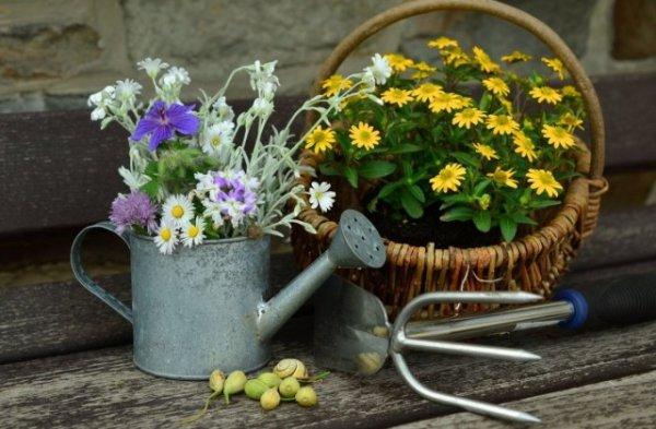 Лунный календарь посева цветов в июне 2019 года