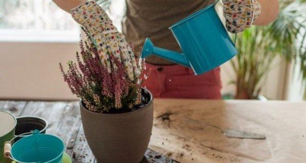 Как удобрять комнатные растения правильно - советы с фото и видео