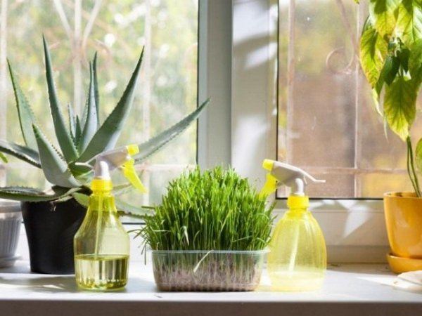 Приборы увлажнители для комнатных растений. Какие бывают увлажнители? Описание с фото и видео