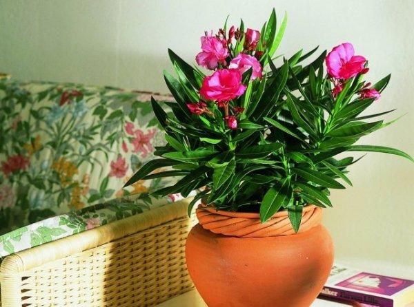 Самые ароматные комнатные растения и цветы с лучшим запахом