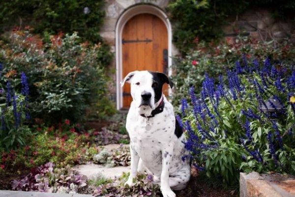 Растения опасные для домашних животных. Список ядовитых с фото и видео