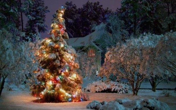 Способы украшения сада к зимним праздникам с фото