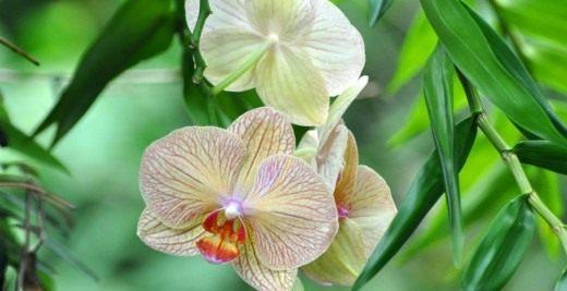Выращивание орхидей с фото и видео. Как приручить строптивую орхидею?