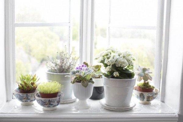 Роль комнатных растений в интерьере - ТОП-5 с фото и видео
