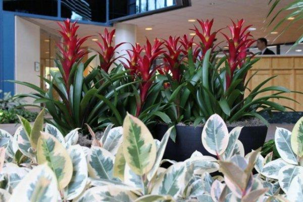 Лучшие растения для холодного фойе и холла. Для яркого и рассеянного освещения