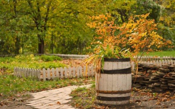 Что можно посадить в ноябре на даче в огороде