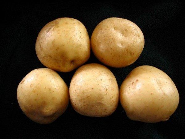 Выращиваем картофель - подготовка, посадка и уход от А до Я