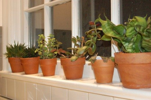 Окно на север - какие комнатные растения выбрать