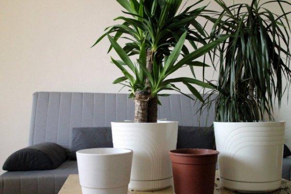 Субстрат для больших растений и дренаж для комнатных гигантов