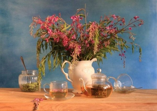 Копорский чай полезные свойства и ферментация с фото и видео