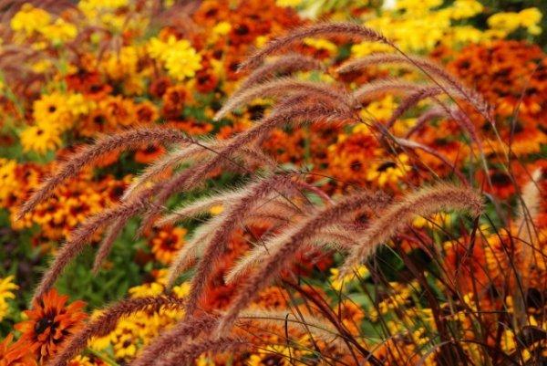 Осенние цветы фото с названием и описанием самых ярких
