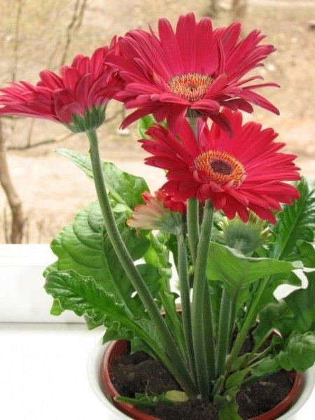 Проблемы выращивания комнатных растений
