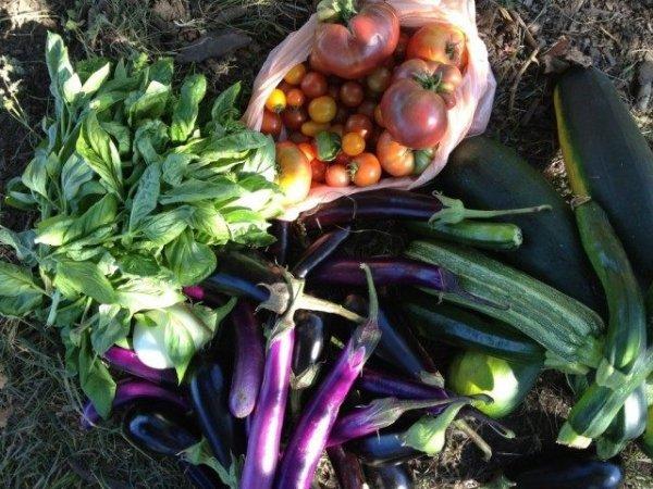 Календарь садово-огородных работ на сентябрь 2019 года