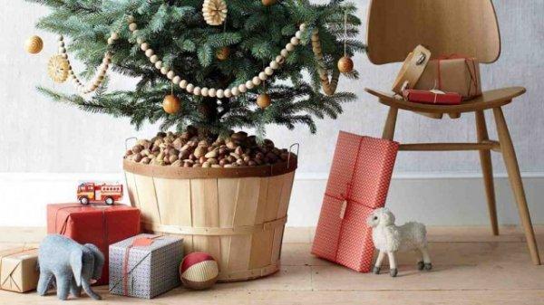 Новогодняя елка в горшке - как выбрать и сохранить до весны