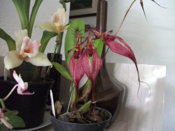 Самые необычные орхидеи в мире фото и названия