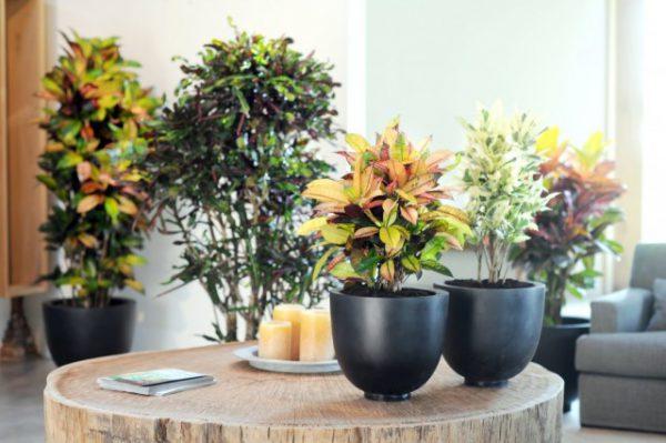 Растения с цветными листьями - фото и названия с описанием