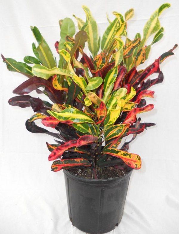 Растения для зимнего интерьера ТОП-7 с фото и названия