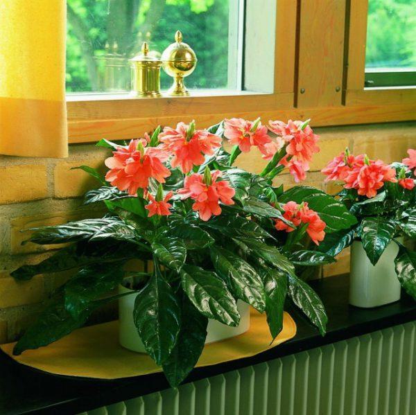 Комнатные растения из тропиков фото и названия с описанием ТОП-5