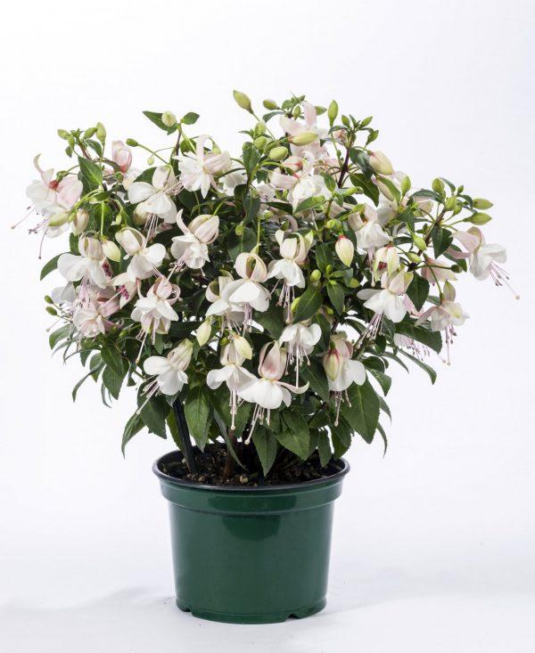 Комнатные растения с самыми изящными цветками. Список названий растений с красивыми цветками. Фото