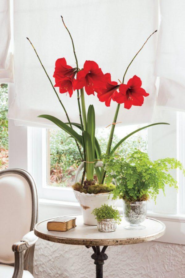 Растения с крупными цветками ТОП-5 с фото и описанием