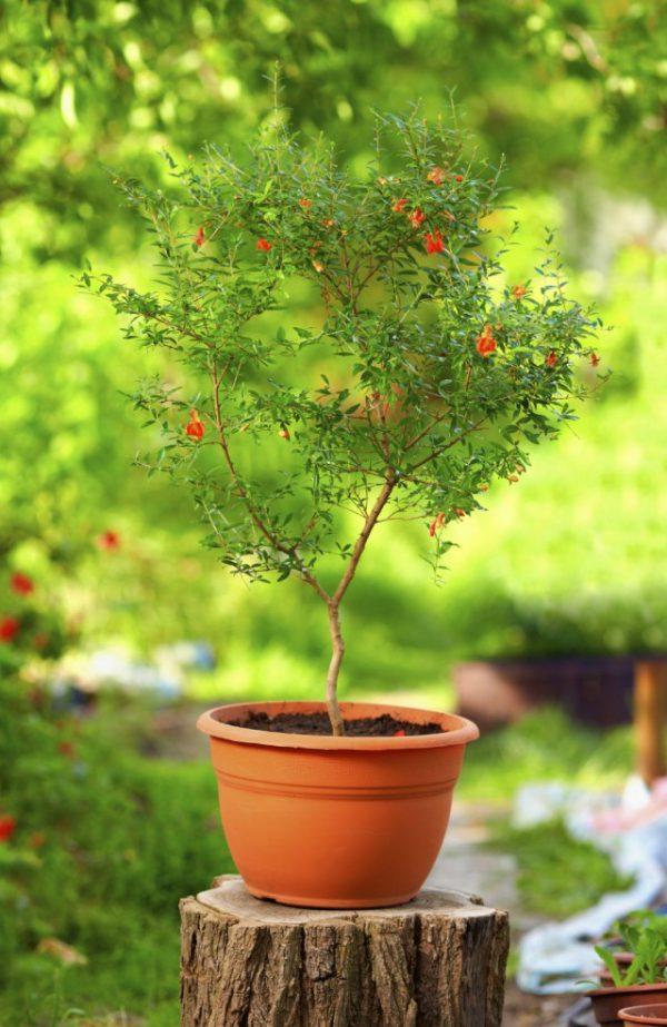 Комнатные растения с трубчатыми цветками - фото с названиями ТОП-5