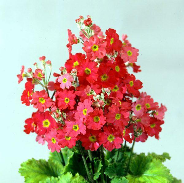 Растения с крупными соцветиями ТОП-5 с фото и описанием