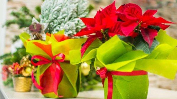 Цветы в горшке в подарок женщине фото и названия с описанием