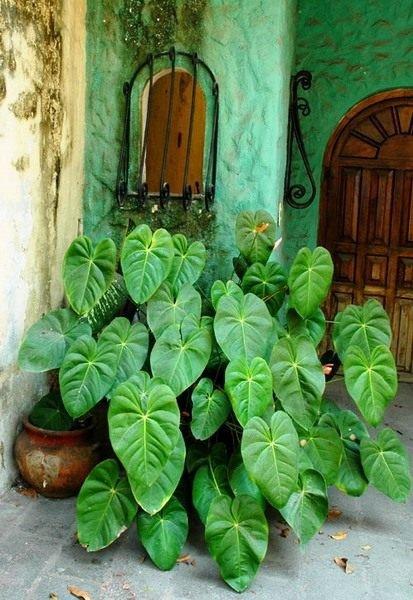 Полезные комнатные растения - фото и названия с описанием