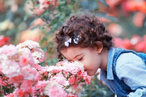 Розы Раффлс фото и описание сорта, посадка и уход