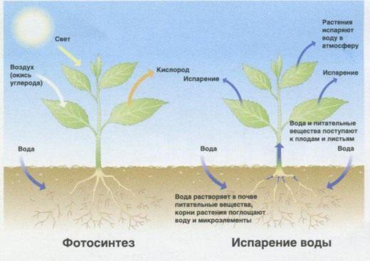 Удобрение и подкормка растений - виды и свойства