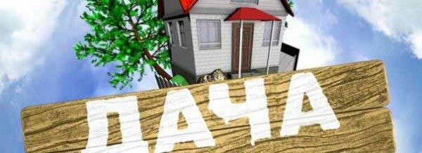 Как посадить укроп и петрушку на даче с фото и видео