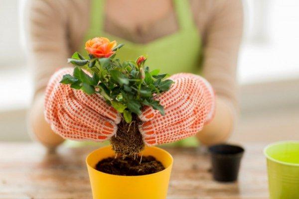 5 лучших садовых растений, которые можно выращивать дома. Список названий с фото и видео