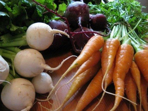 Корнеплоды - морковь, репа, свекла, редис и петрушка