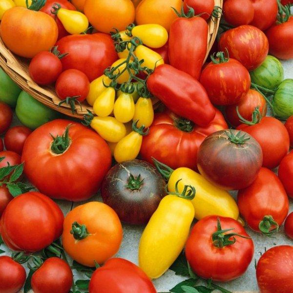 Лучшие сорта помидоров для любой погоды с фото и видео