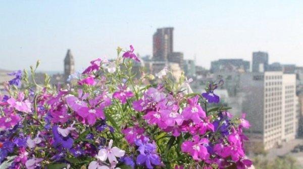 Растения на балконе. Подбор растений для ветреных, солнечных и притененных балконов
