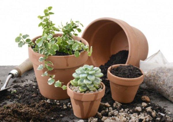 Субстрат для комнатных растений- как выбирать, чем заменить, виды