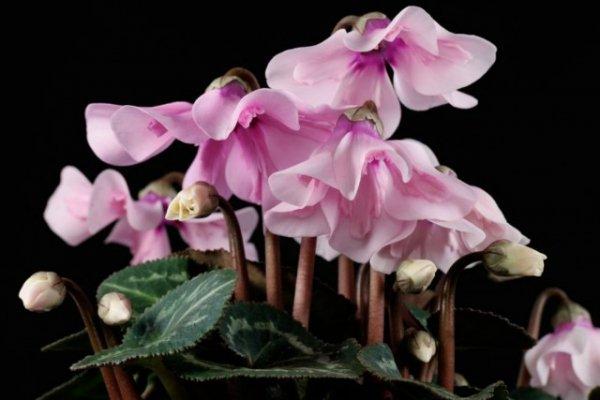 Ярусные растения фото и названия с многоуровневым эффектом