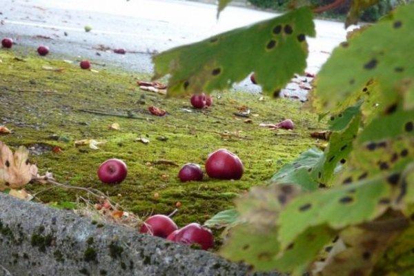 Календарь садово-огородных работ на октябрь 2019