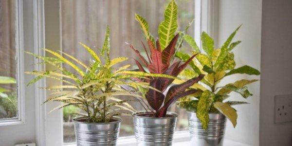 Правильное питание комнатных растений - удобрения, макро и микроэлементы