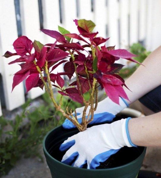 Срочная пересадка комнатных растений - больных и поврежденных
